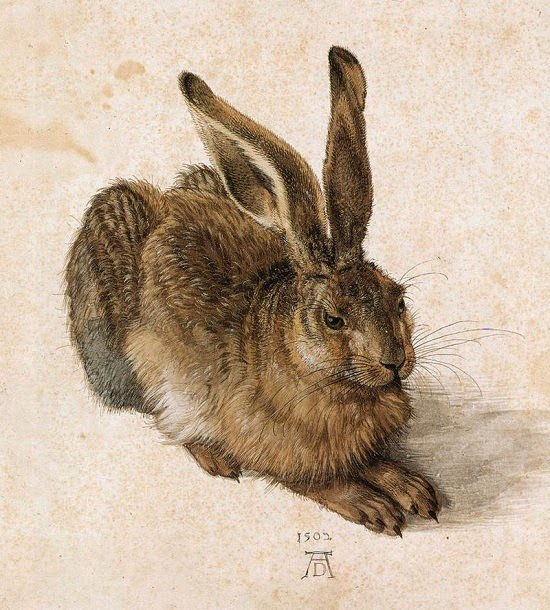 800px-Durer_Young_Hare